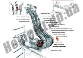 Скамья PRO для пресса (римский стул) и гиперэкстензии (тренажер спины) фото 7