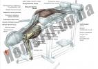 Скамья PRO для пресса (римский стул) и гиперэкстензии (тренажер спины) фото 5