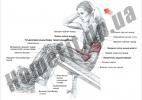 Скамья PRO для пресса (римский стул) и гиперэкстензии (тренажер спины) фото 6